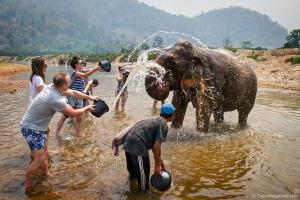 Elephant Trekking Tour Packages