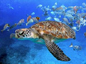 Surin Island: Full Day Snorkeling Tour Packages