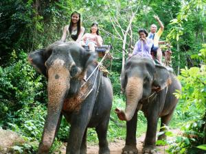 Pa-la-u Waterfall & Elephant Riding Tour Packages